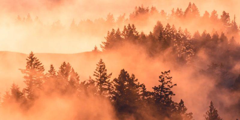 Umwelt-, Natur-, und Klimaschutz